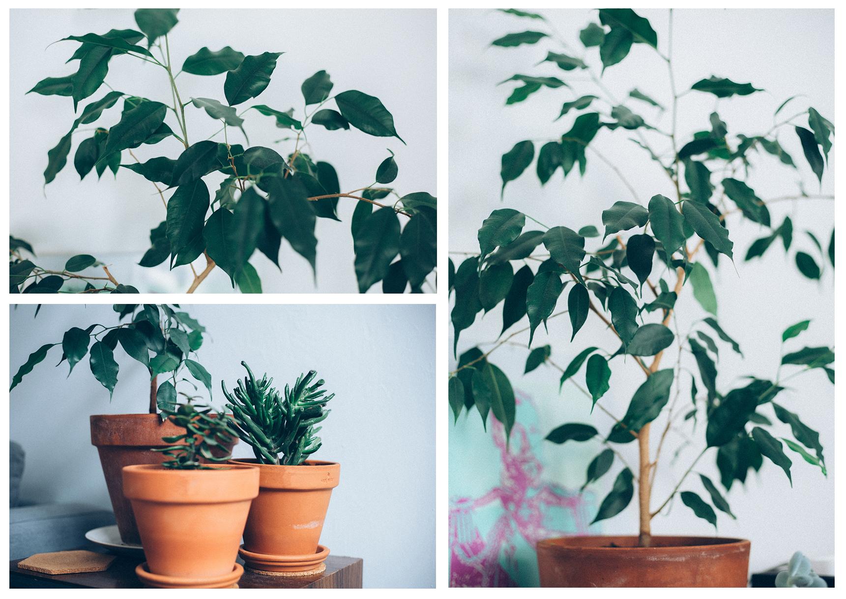 green succulentes
