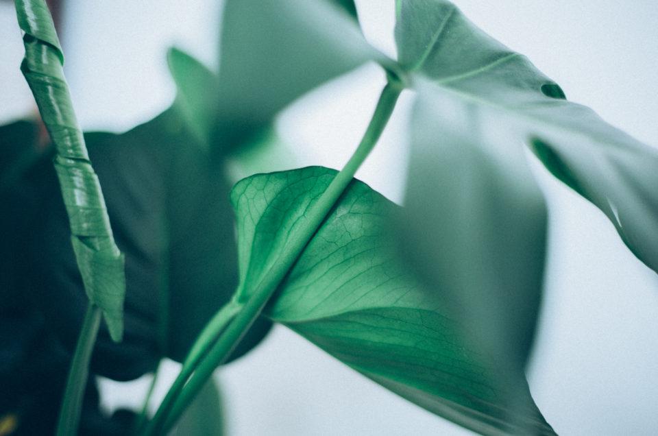 Succulentes #2