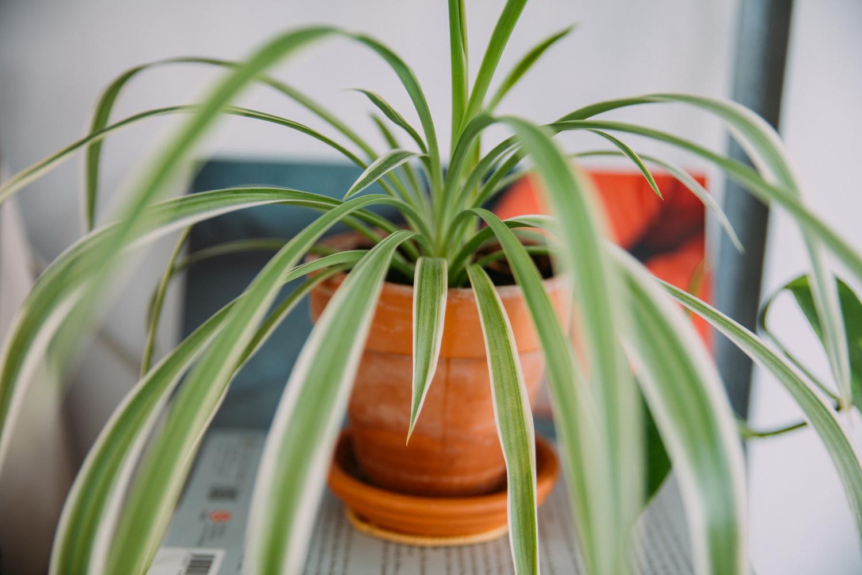 Plantes #3