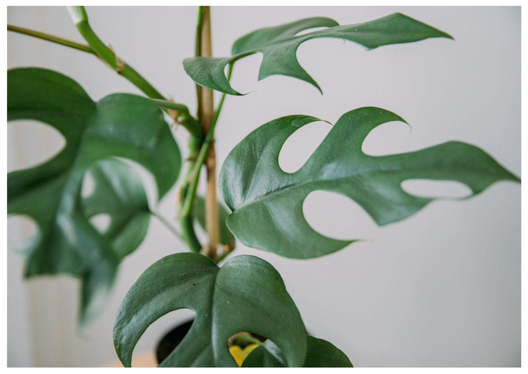 parlons plantes vertes accalmie studio